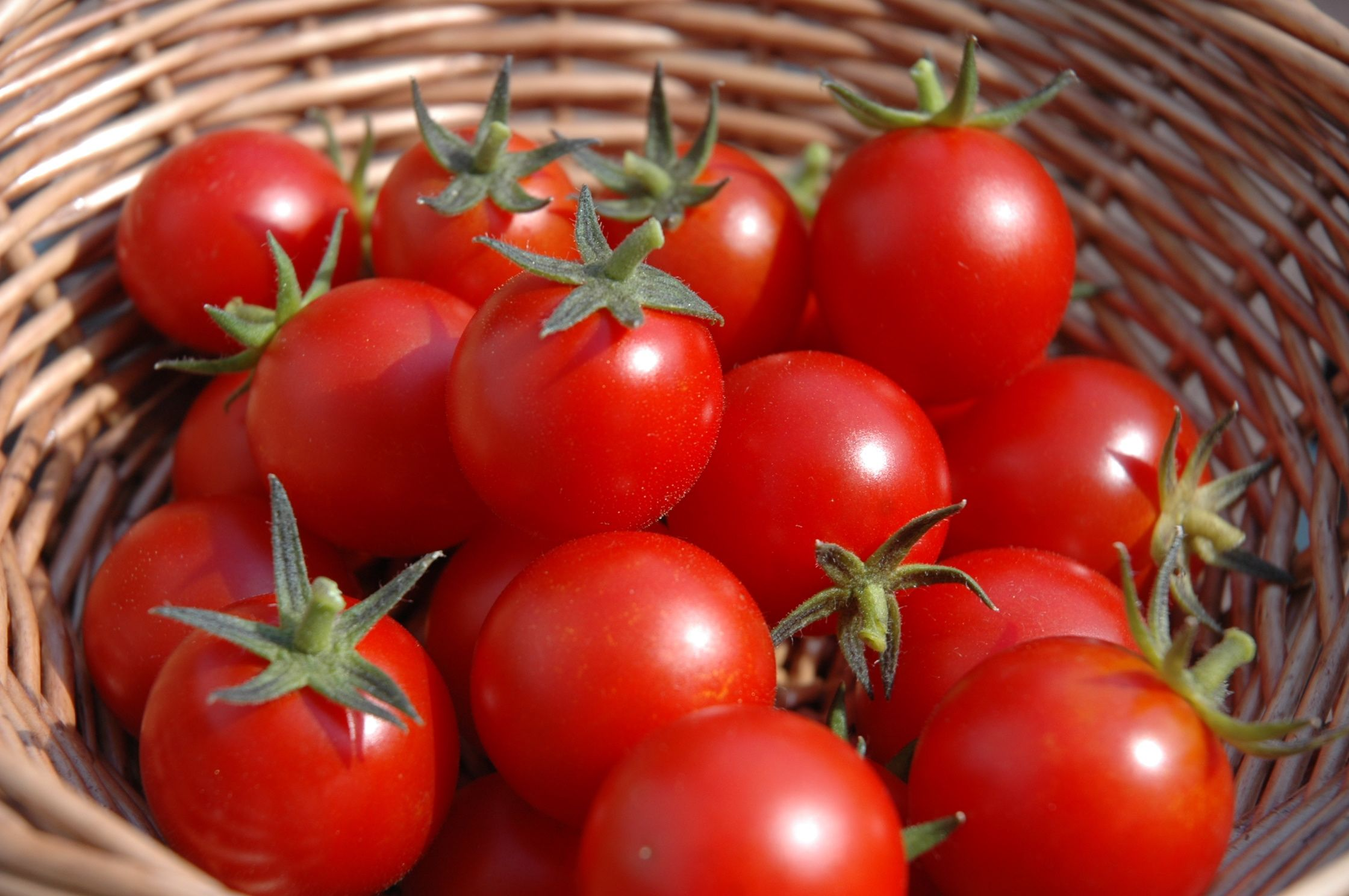 Growing cherry tomatoes with Tomato Dirt
