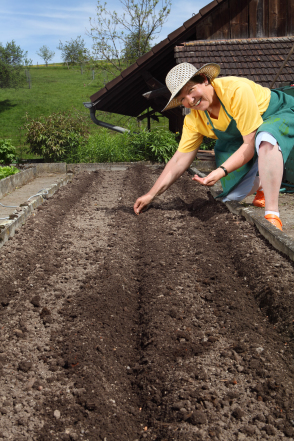 Preparing the garden soil for planting with Tomato Dirt