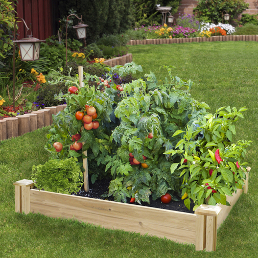 Cedar raised bed from raisedbeds.com