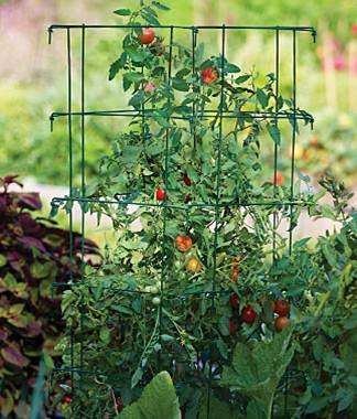 Stackable tomato cages with Tomato Dirt