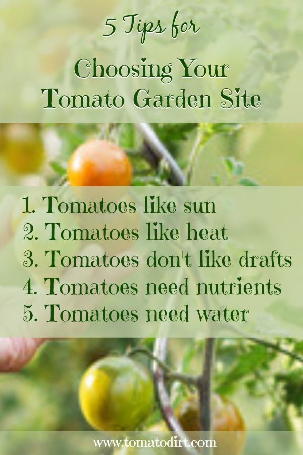 5 tips for choosing a home garden site for tomatoes with Tomato Dirt