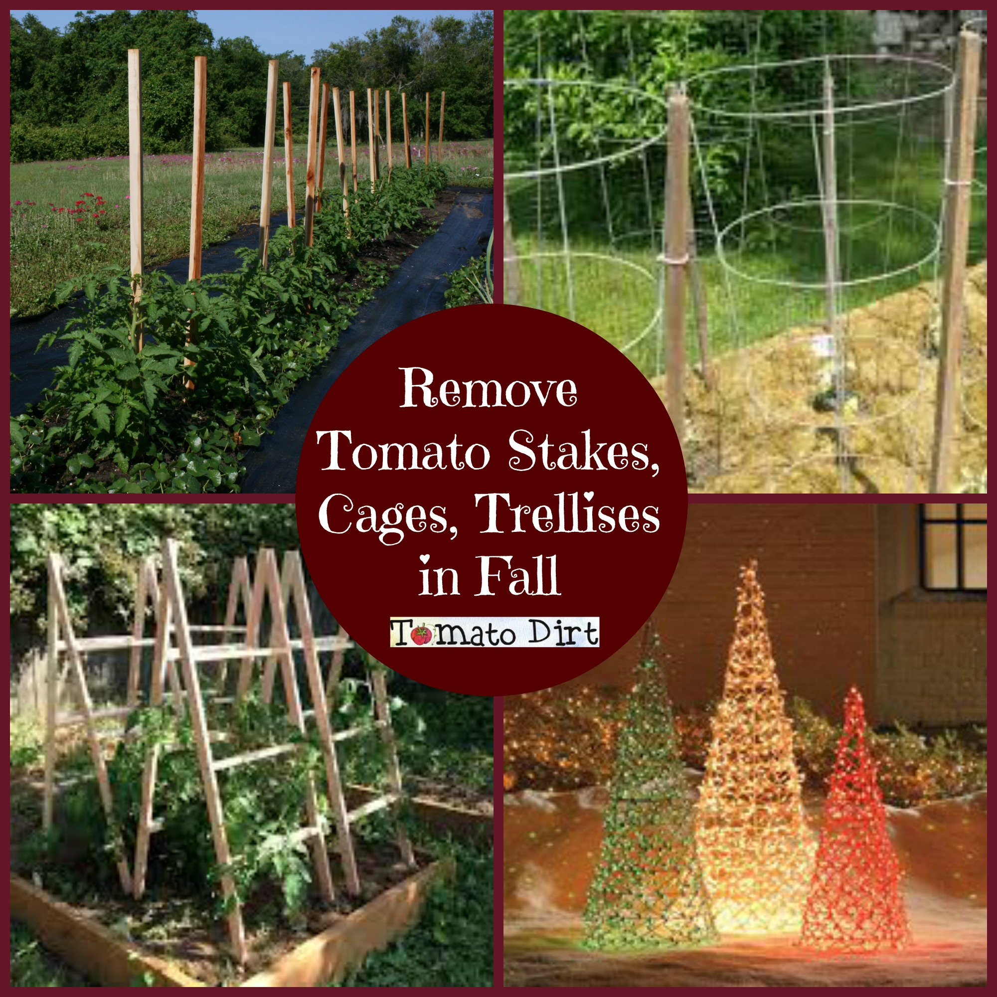 Remove Tomato Stakes, Cages, Trellises in Fall from Tomato Dirt