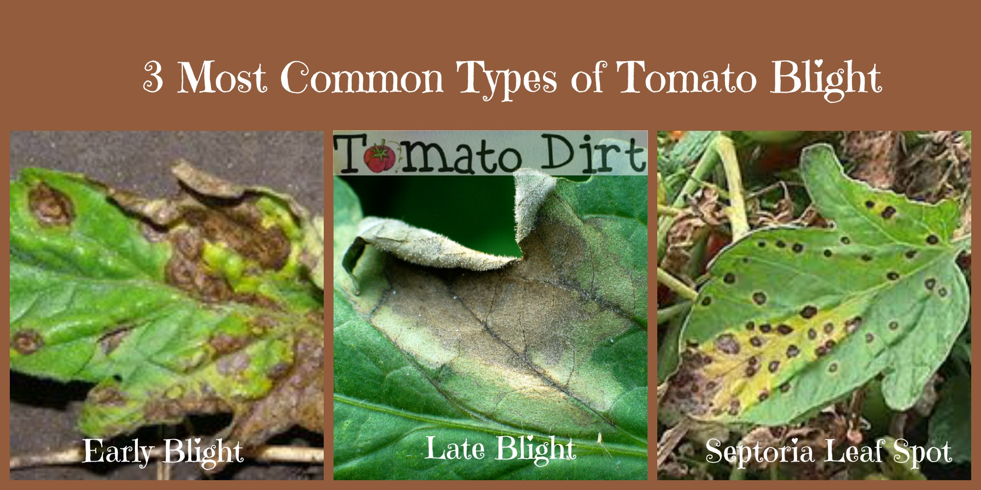 3 most common types of tomato blight with Tomato Dirt