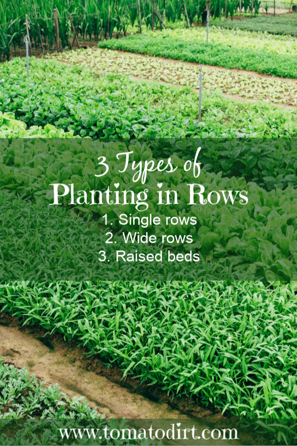 3 types of planting in rows when starting a vegetable garden with Tomato Dirt #GardeningTips #GrowingTomatoes