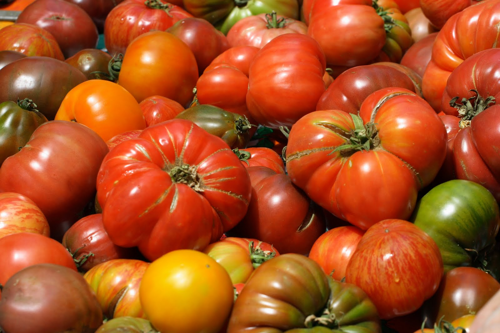 Save tomato seeds from heirloom tomatoes with Tomato Dirt