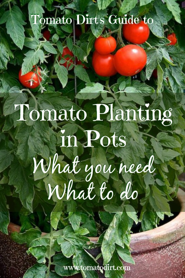 Tomato planting in pots: what you you, what to do. A guide to planting container tomatoes #TomatoGrowingTips #GrowingTomatoes with Tomato Dirt