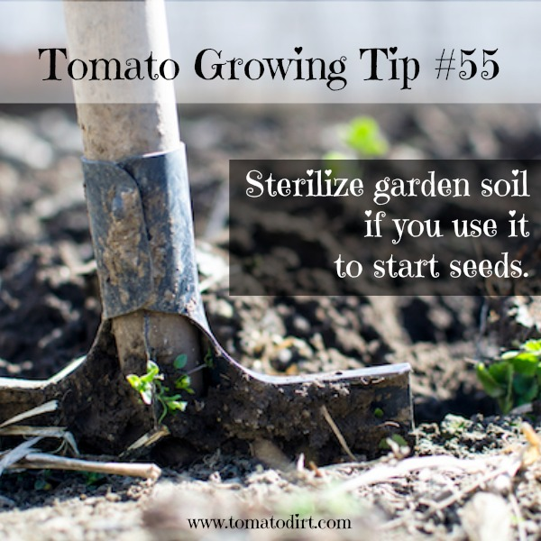 Tomato Growing Tip #55: if you must use garden soil to start seeds, sterilize it first. With Tomato Dirt