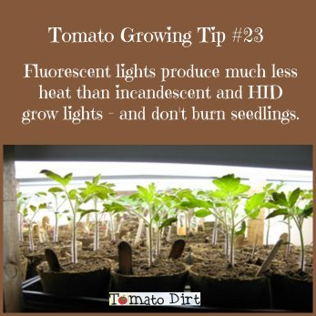 Tomato Growing Tip #23 when growing tomatoes indoors using tomato grow lights with Tomato Dirt.