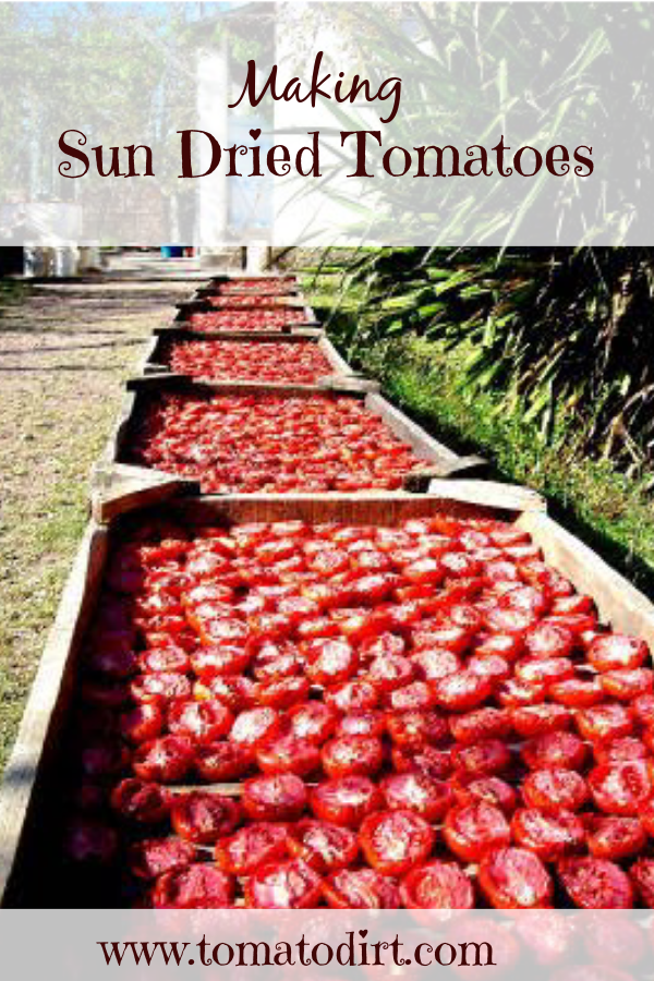 Making sun dried tomatoes: a step by step tutorial with Tomato Dirt #GrowingTomatoes (image -RecipeHubs)