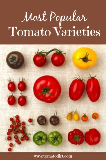 Most Popular Tomato Varieties with Tomato Dirt. #GrowTomatoes #HomeGardening