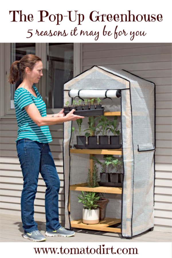 A pop-up greenhouse: why it may be for you with Tomato Dirt #GardeningTips #homegardening