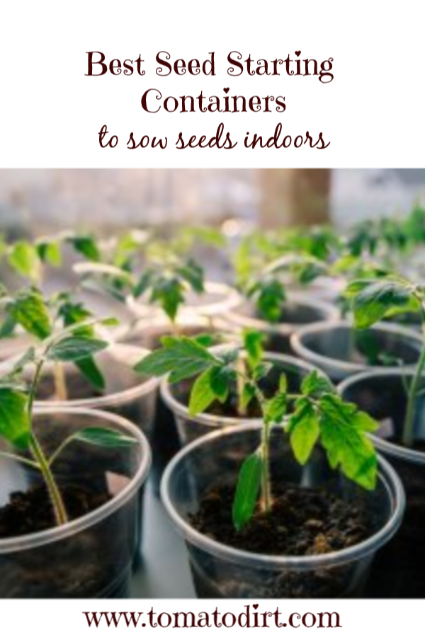 Tips for choosing tomato seed starting containers with Tomato Dirt #GrowingTomatoes #HomeGardening