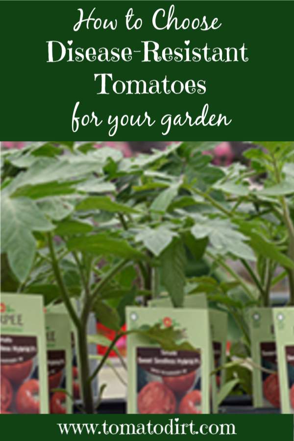 How to choose disease-resistant tomatoes for your garden with Tomato Dirt #homegardening #GardeningTips