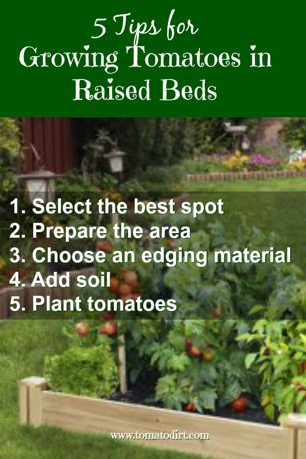 5 gardening tips for growing tomatoes in raised beds with Tomato Dirt. #GardeningTips #TomatoGrowingTips #GrowingTomatoes