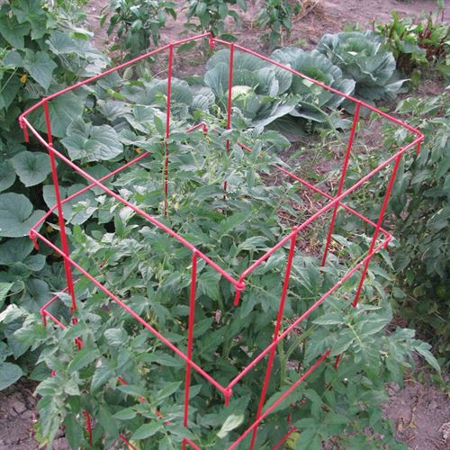 Gardener's Supply Tomato Cages with Tomato Dirt