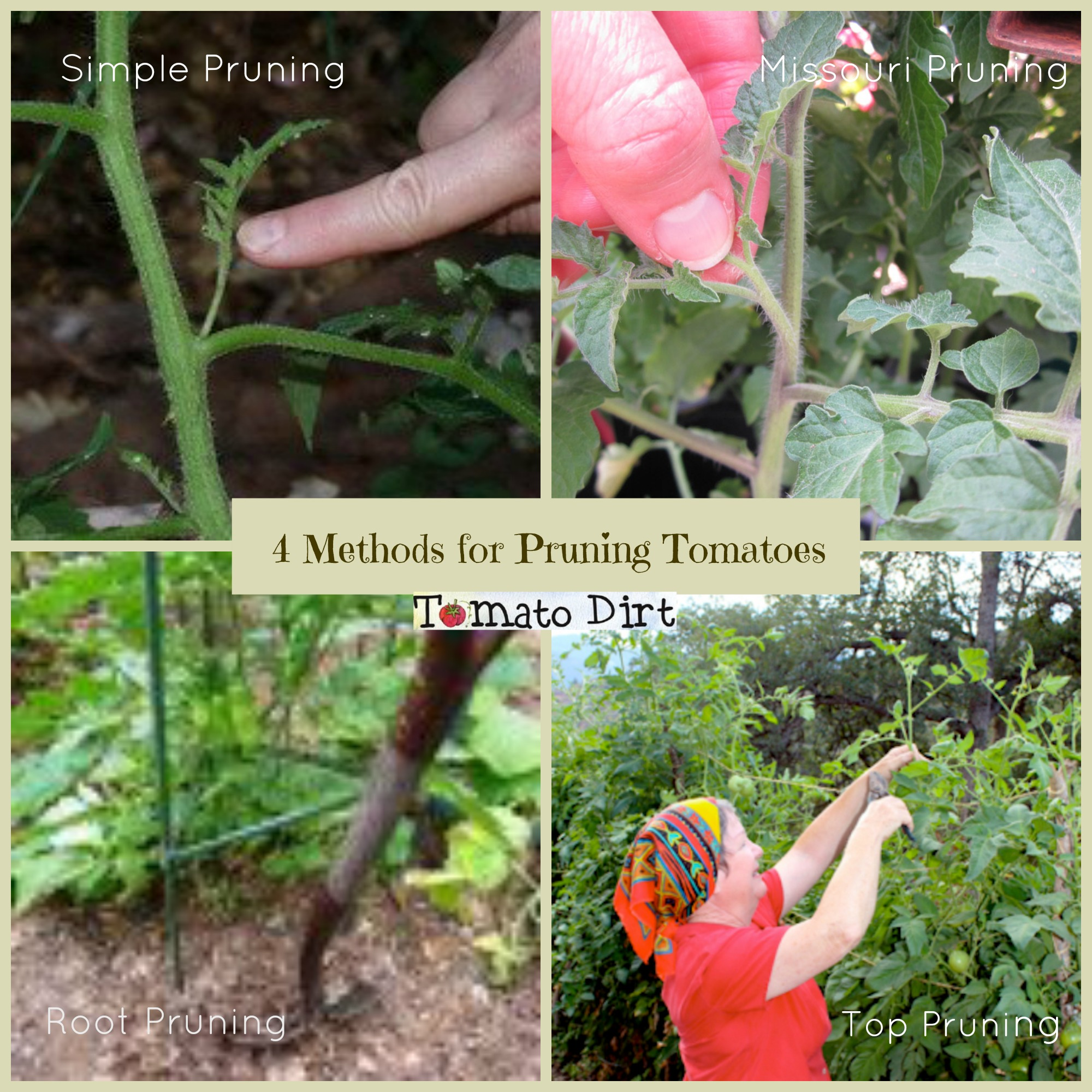 4 methods of pruning tomatoes with Tomato Dirt