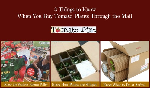 3 things to know when you buy tomato plants through the mail