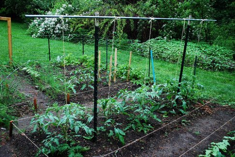Tomato trellis from A Growing Tradition with Tomato Dirt