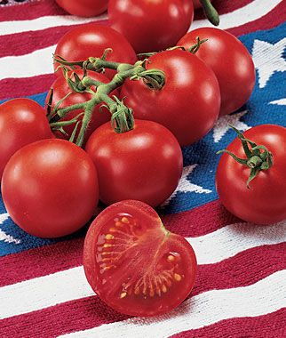 Fourth of July Tomato from Burpee via Tomato Dirt