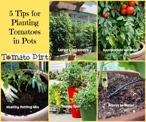 Grow A Garden In Pots 5 tips for planting tomatoes in pots how to plan for success 5 tips for planting tomatoes in pots from tomato dirt workwithnaturefo