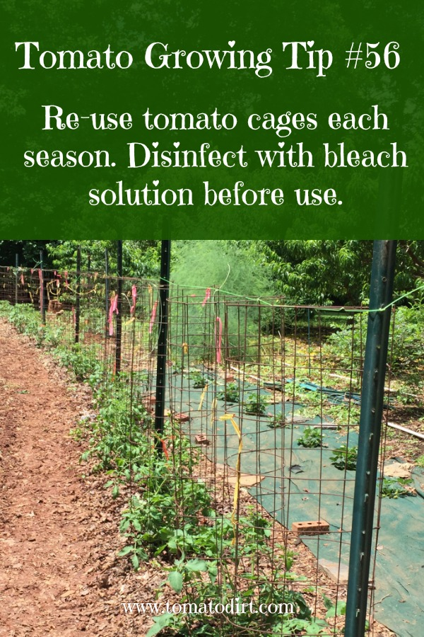 Tomato Growing Tip #56: reuse tomato cages each year with Tomato Dirt