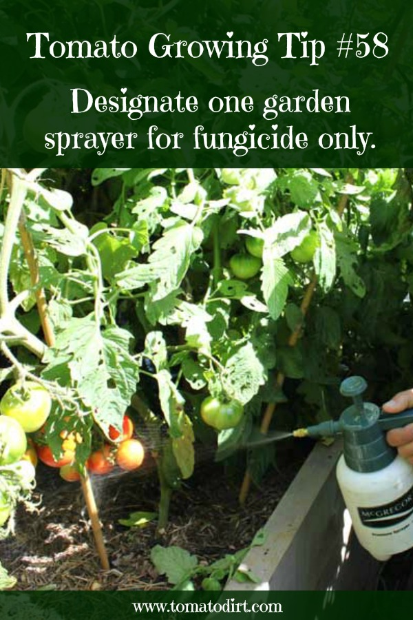 Tomato Growing Tip #58: designate one garden sprayer solely to apply fungicide with Tomato Dirt
