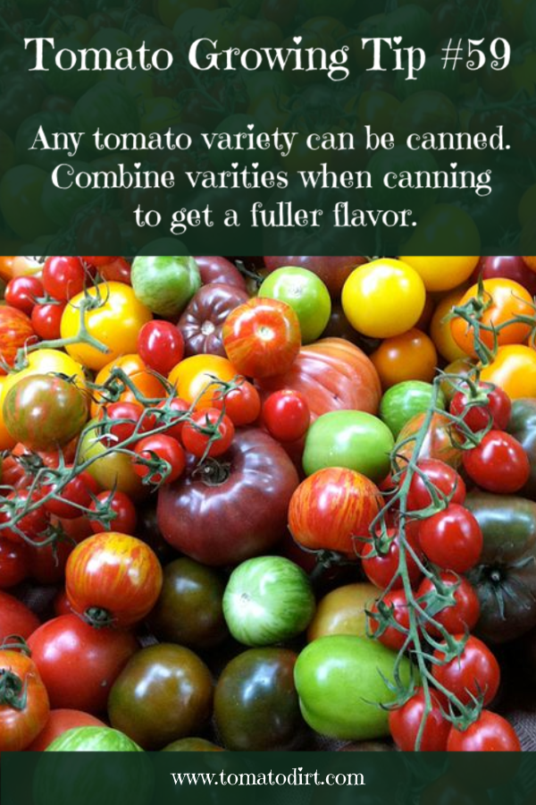 Tomato Growing Tip #59: tomato varieties for canning with Tomato Dirt #GrowingTomatoes