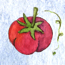 tomato icon