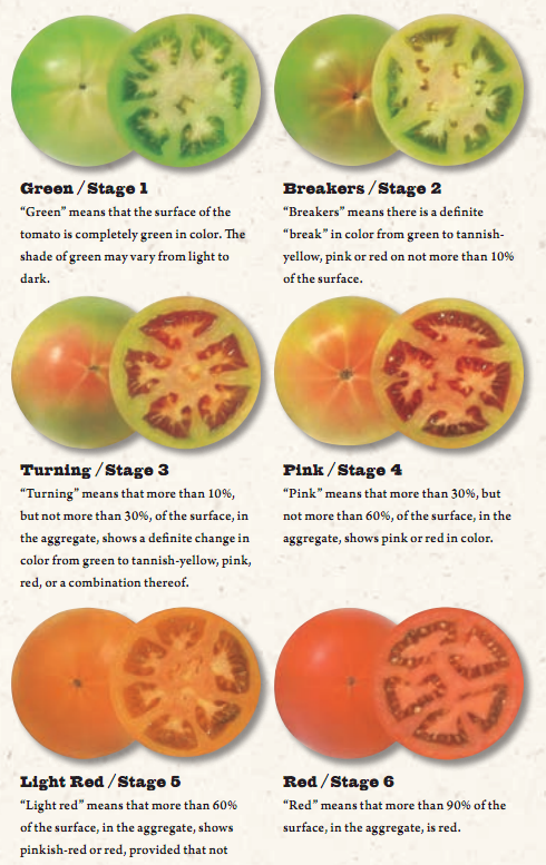 USDA Tomato Ripening stages to help you know when to pick tomatoes with Tomato Dirt.