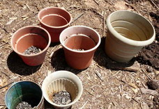 different containers for growing tomatoes in pots