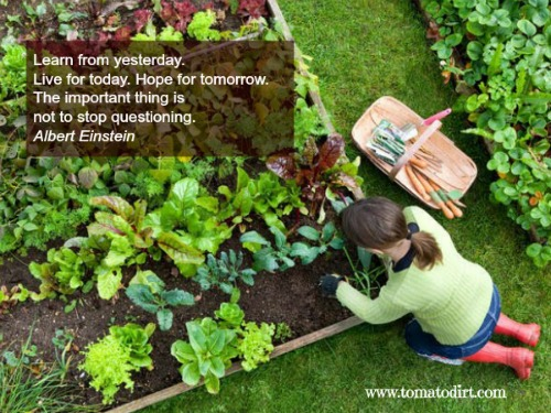 Einstein: learn from yesterday. With Tomato Dirt