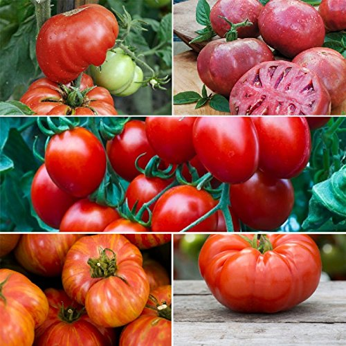 Tomato seeds are a great gift for gardeners with Tomato Dirt