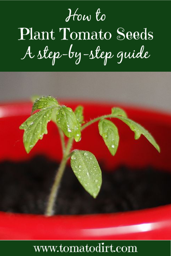 How to plant tomato seeds with Tomato Dirt #HomeGardening #GrowingTomatoes