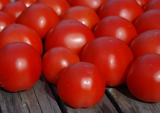 Jet Star tomatoes