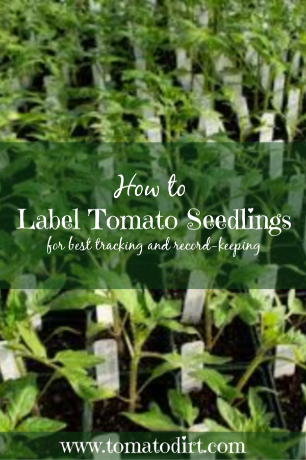 How to label tomato seedlings for best tracking and record-keeping with Tomato Dirt #GardeningTips #GrowingTomatoes