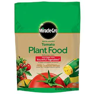 Miracle Gro Tomatoes