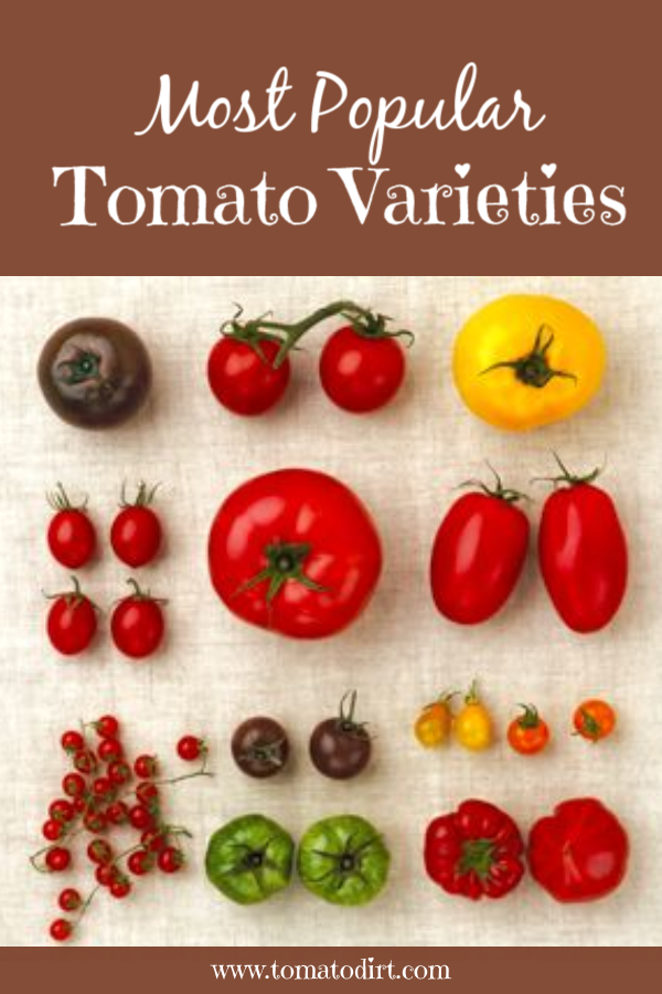 Most Popular Tomato Varieties To Grow In The Home Garden