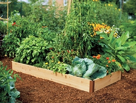 Tomato Dirt Issue 17 Growing Tomatoes in Raised Beds
