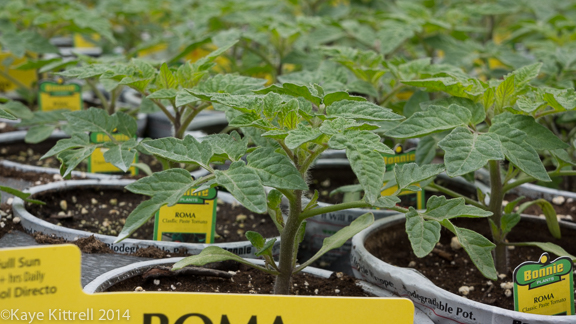 Check labels for disease resistant tomato varieties with Tomato Dirt