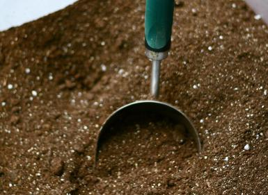 Seed starting mix with Tomato Dirt