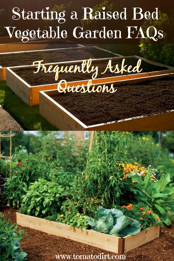 starting a raised bed vegetable garden faqs