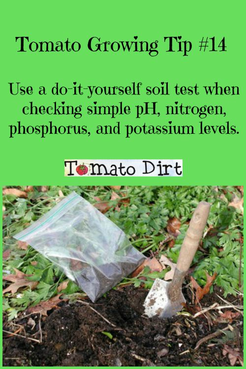 Tomato dirt 87 small tomatoes weak plants check for for Soil yourself
