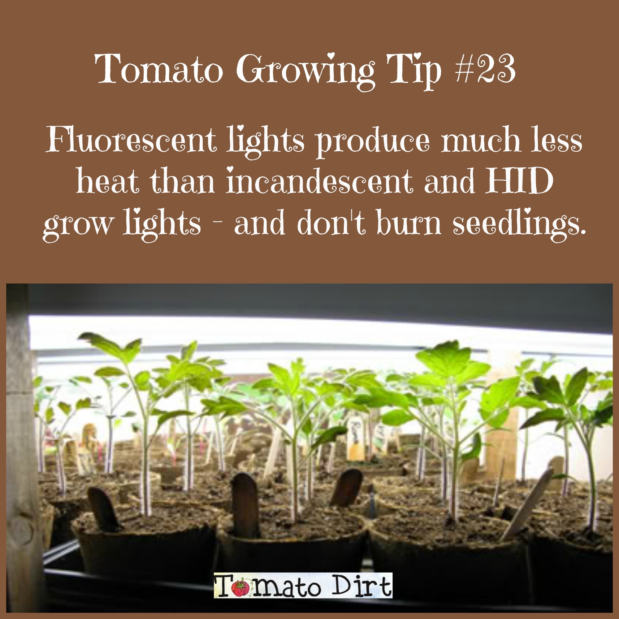 Using Fluorescent Grow Lights To Start Seeds Grow Tomatoes Indoors