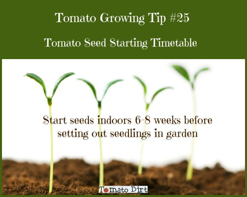 Tomato seed starting timetable with Tomato Dirt