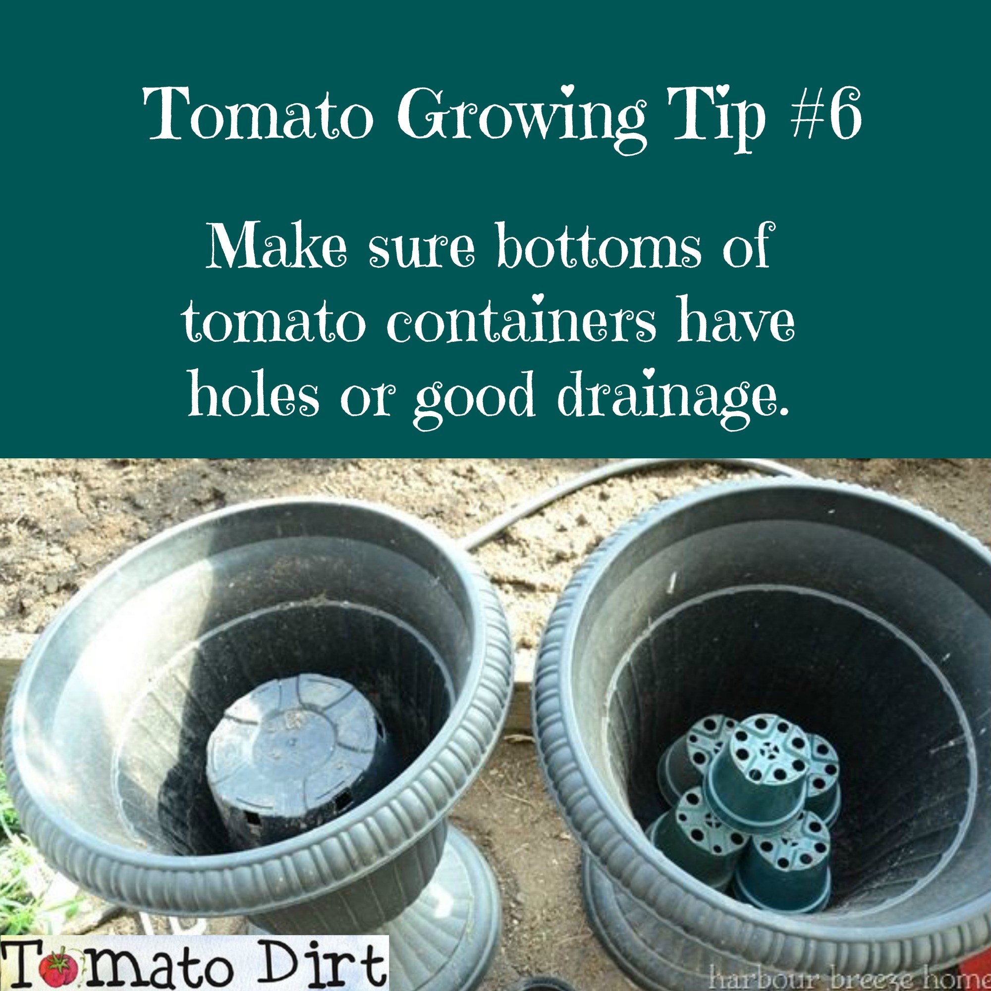 Tomato Growing Tip #6: make sure tomato containers have holes for drainage with Tomato Dirt