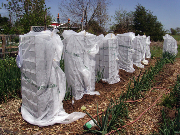 Tomato cages with protective covers from Masters of Horticulture