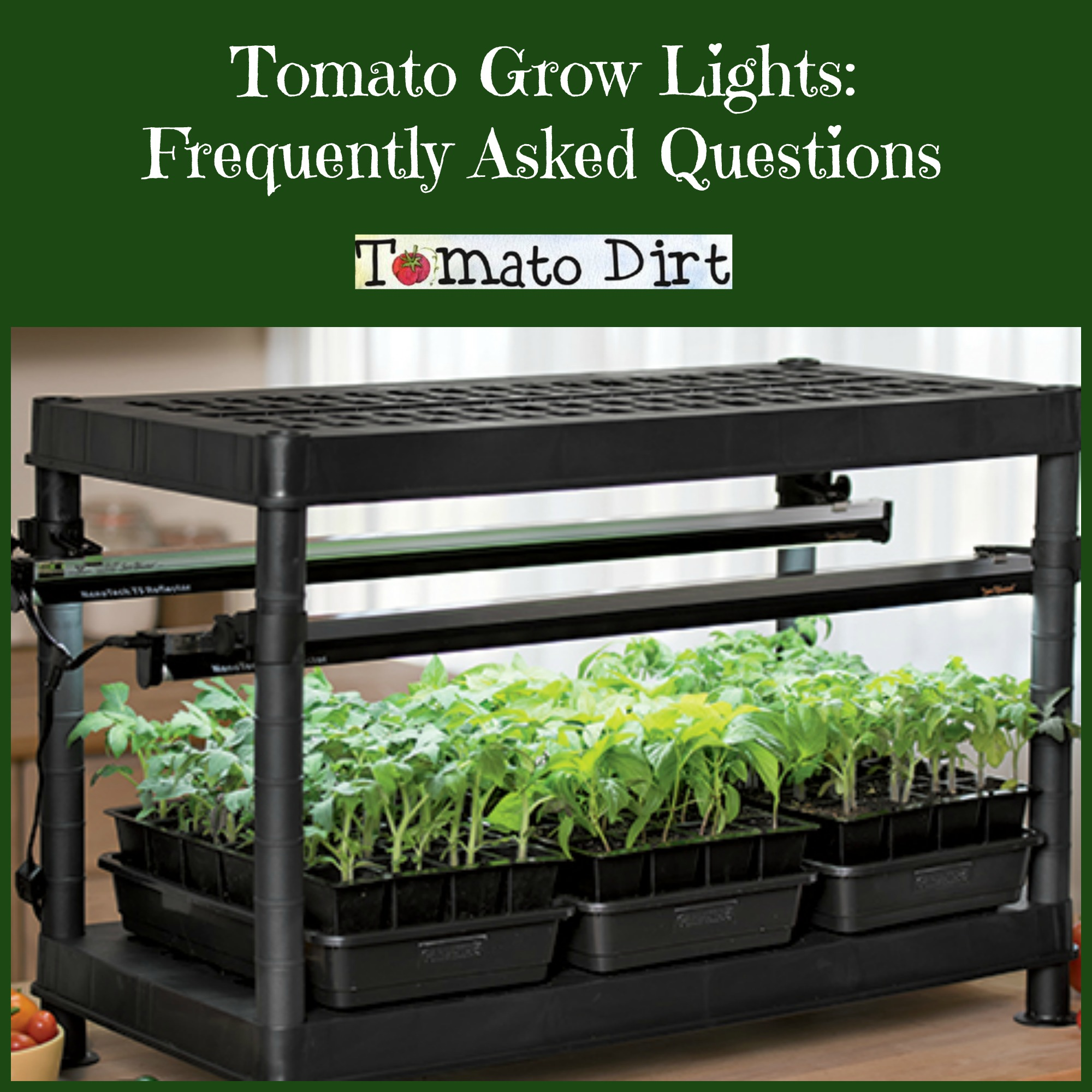 Tomato Grow Lights for Seedlings: FAQs from Tomato Dirt