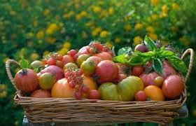 Tomato varieties in a basket with Tomato Dirt