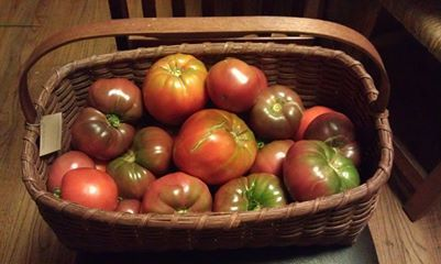 Tomatoes from the garden of Tomato Dirt-er Shelley Bain