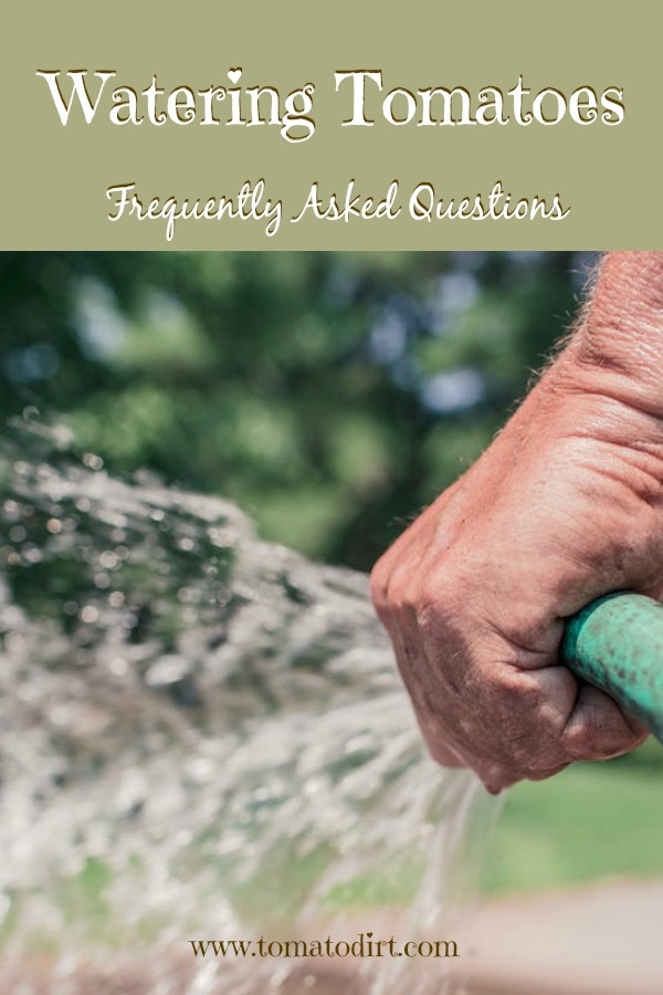 Watering tomatoes: frequently asked questions. When to water tomato plants, how much to water tomato plants with Tomato Dirt. #GrowingTomatoes